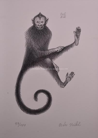 Petr Nikl - Opička