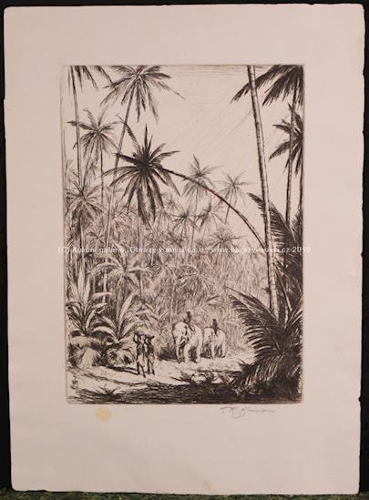 T. F. Šimon - Tropický prales na Cejlonu
