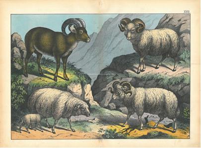 různí autoři - Konvolut 4 litografií - Zvířata